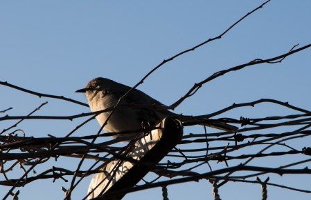 Cat Bird on a Wire.jpg