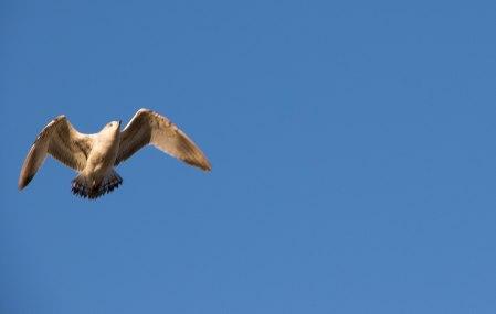 Seagull Flyby.jpg