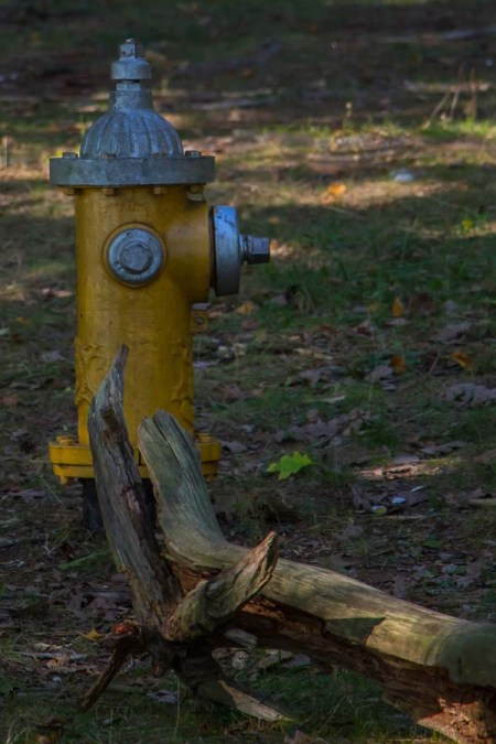hydrant-in-the-woods