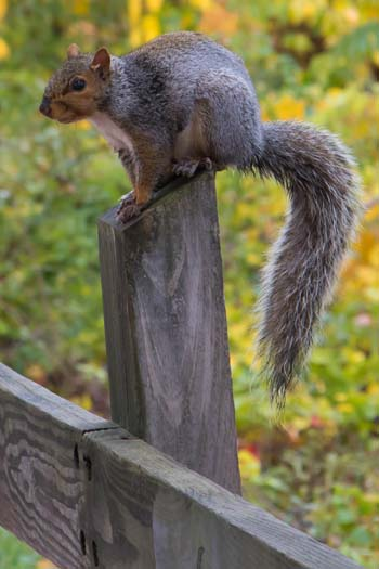 squirrel-post