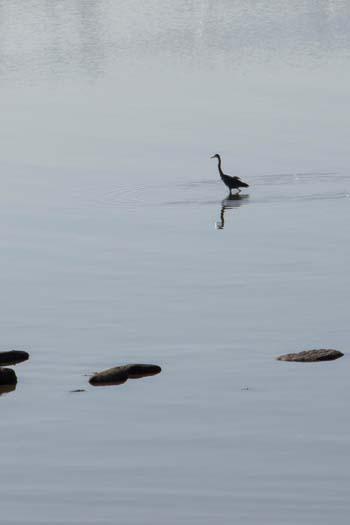 the-last-heron