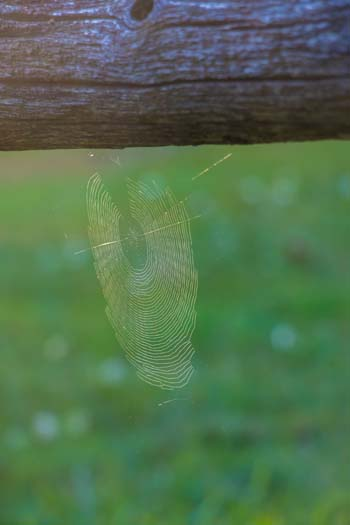 Spider Web Fence