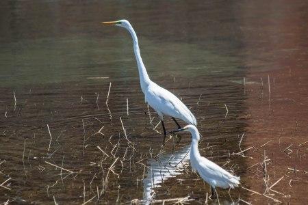 The Egrets